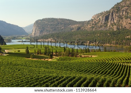 Okanagan Valley Vineyard Scenic, British Columbia. Rolling hills of vineyards in front of of Vaseux Lake and the McIntyre Bluffs in the Okanagan Valley, British Columbia, Canada. - stock photo