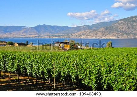 Okanagan Valley vineyards, British Columbia - stock photo