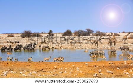 Okaukeujo Waterhole with Giraffe, Zebra, oryx and springbok with lens flare - stock photo