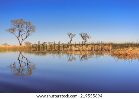 Okavango Delta vegetation, Botswana - stock photo