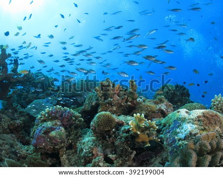 Okinawa Blue / A lot of tropical fish in a reef with sun light