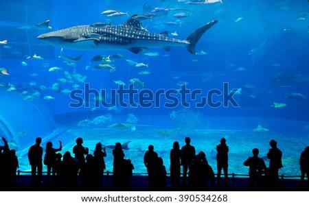 Okinawa Churaumi Aquarium  - stock photo