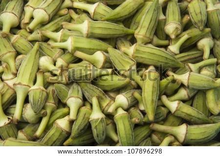 Okra Crop - stock photo