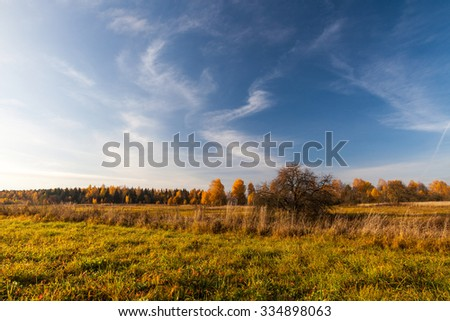 Old abandoned apple orchard in front of trees covered with golden leaf in autumn on sunny morning