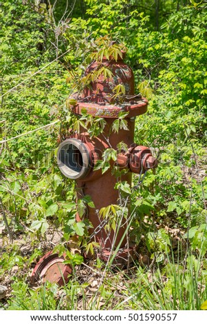 Old abandoned fire hydrant covered in vines.