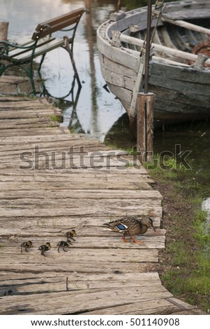 Old, Abandoned fishing boat on the docs with ducklings