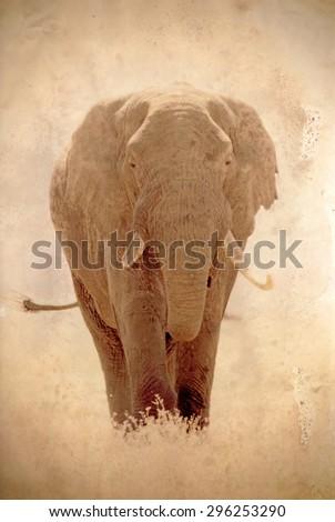 Old african elephant, Loxodonta Africana, in Ngorongoro Conservation Area, Tanzania. Sepia tone vintage image with grunge effect. - stock photo