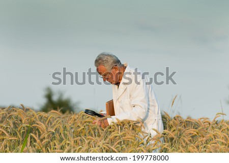 Old agronomist in white coat looking through magnifier in wheat field - stock photo