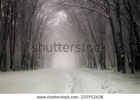Old alley in the park on a foggy winter day - stock photo