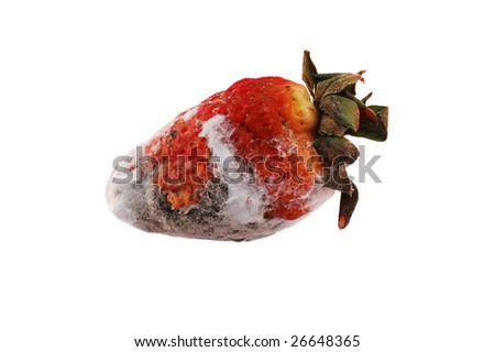 old and mold strawberry