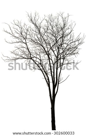 Old and silhouette dead tree isolated on white background