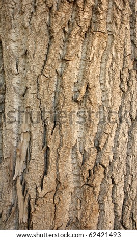 Old bark texture - stock photo