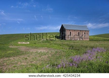 Old barn in green field in the palouse region of eastern Washington.