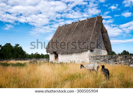 Old barn with a thatched roof. Curly haired sheep graze in the tall grass. Beautiful blue sky with white clouds. Location: Swedish island of Faro, near Gotland, in the Baltic Sea. - stock photo