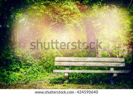 Old bench in summer park or forest.  Outdoor  nature background with wooden bench. - stock photo