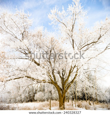 old big frozen tree on color background with blue sky