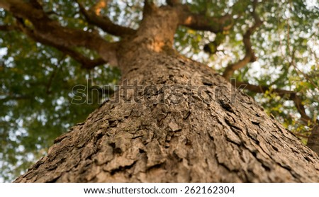 Old big Tree  - stock photo