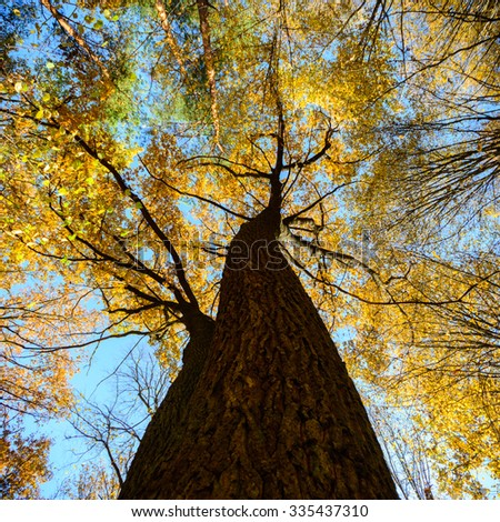 old big tree on color background with blue sky, nature series - stock photo