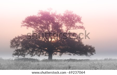 Old,big tree on the field,morning,with frozen grass - stock photo