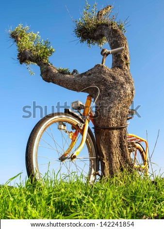 Old bike chained to the tree, for security, ecology, nature themes - stock photo