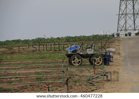 Old blue tractor in a flower plantation