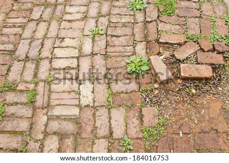 Old brick tiles between which grass grows