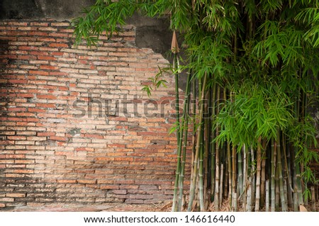 Old brick wall with Bamboo