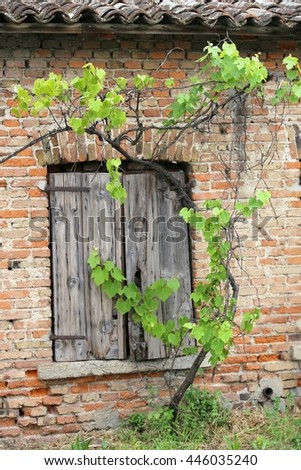 Old brick wall with wooden window frames of the house in the middle of the vineyard