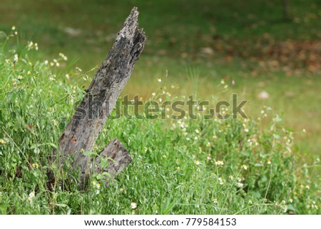 Old broken trunk yard many tiny stock photo royalty free 779584153 old broken trunk in the yard with many tiny white flowers and the grass mightylinksfo