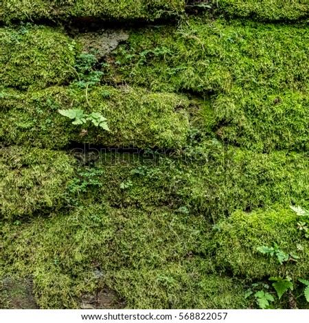 moss wall stock images royalty free images vectors shutterstock. Black Bedroom Furniture Sets. Home Design Ideas