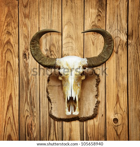 Old buffalo skull hanging on wooden wall