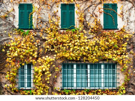 Old building with yellowed ivy and green windows - stock photo