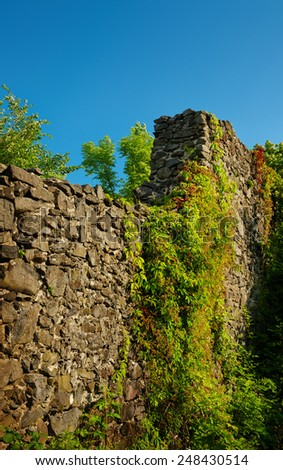 old castle wall twined with virgina creeper - stock photo
