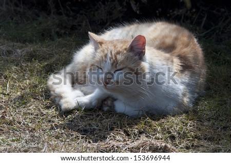 old cat - stock photo