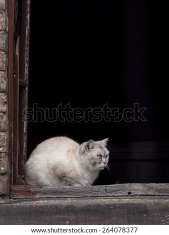 old cat sitting on a windowsill of an dilapidated house
