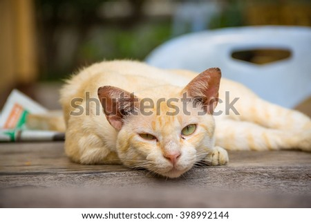 Old cat sleeping on a wooden floor with blur background - stock photo