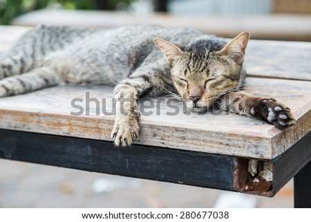 Old cat sleeping on a wooden floor with bokeh background - stock photo