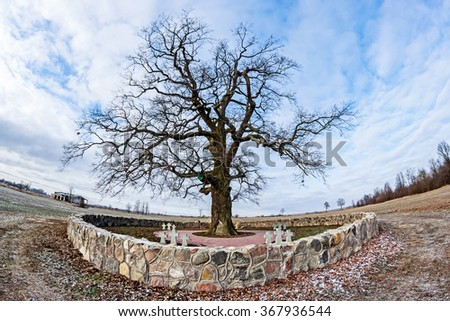 Old cemetery of soldiers enclosed by a stone wall with an aged big branchy oak
