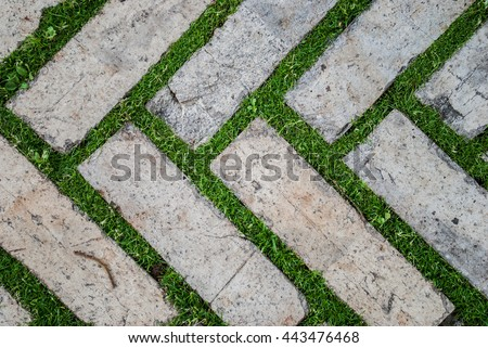 Old cobblestone background with grass / Brick with grass / tiles with grass / stone way in green grass / Bending garden stone path / garden stone path with grass - stock photo