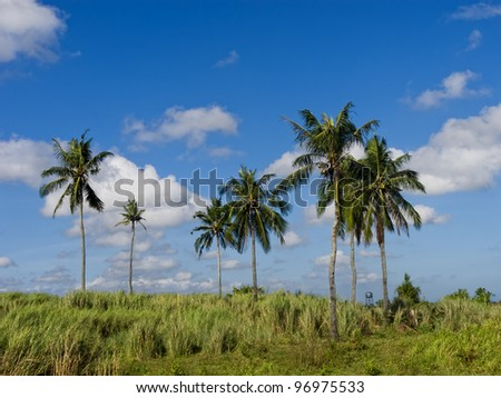 Old coconut trees against blue sky on a sunny day
