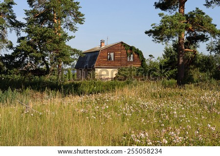 Old country house between big pine trees - stock photo