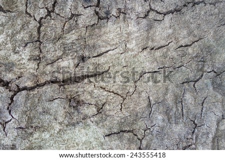 old cracked tree skin texture - stock photo