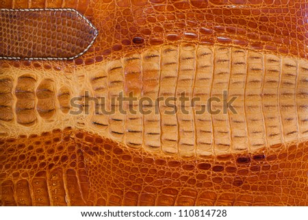 Old crocodile leather texture background