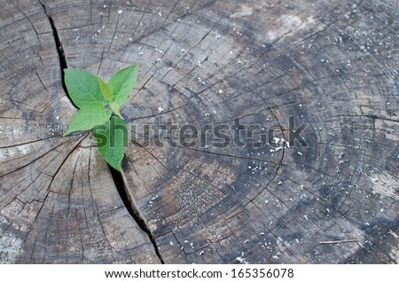 old cut down tree and a strong seedling growing in the center tr - stock photo