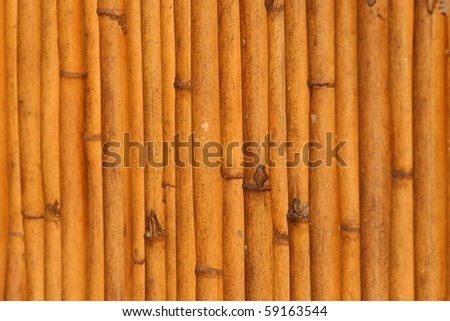 Old dead reads close up creating vertical pattern, selective focus - stock photo
