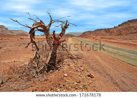 Old dead tree on the roadside and paved narrow road runs through red mountains of Arava desert in Timna national park, Israel. - stock photo