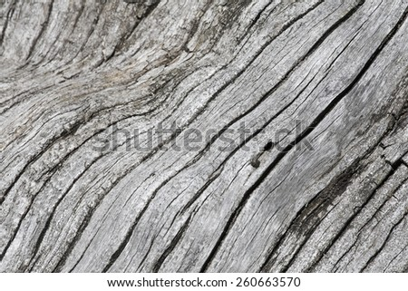 Old dead tree trunk - stock photo