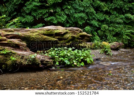 Old Decaying Log in a stream with a fern wall in the background - stock photo