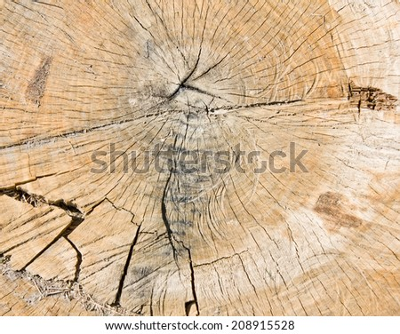 Old dirty oak tree texture. Cross section - stock photo