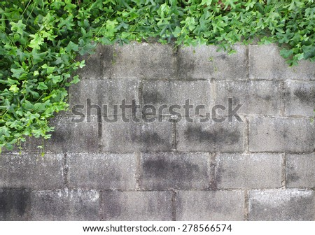 Old dirty wall with tree textures background